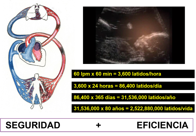 Electrofisiología Cardiaca Latidos por hora