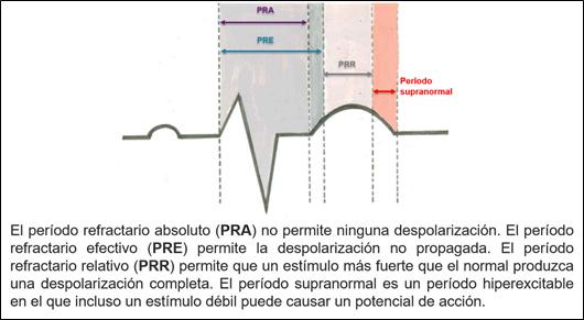 PRA: Periodo refractario absoluto