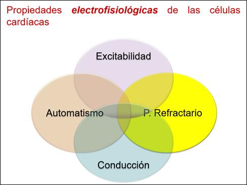 Las propiedades electrofisiológicas de las células
