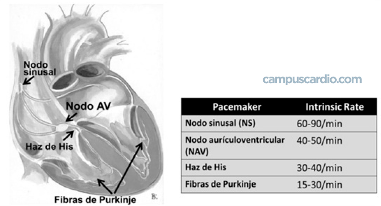 CENTROS-CON-AUTOMATISMO-CAMPUSCARDIO-(1)
