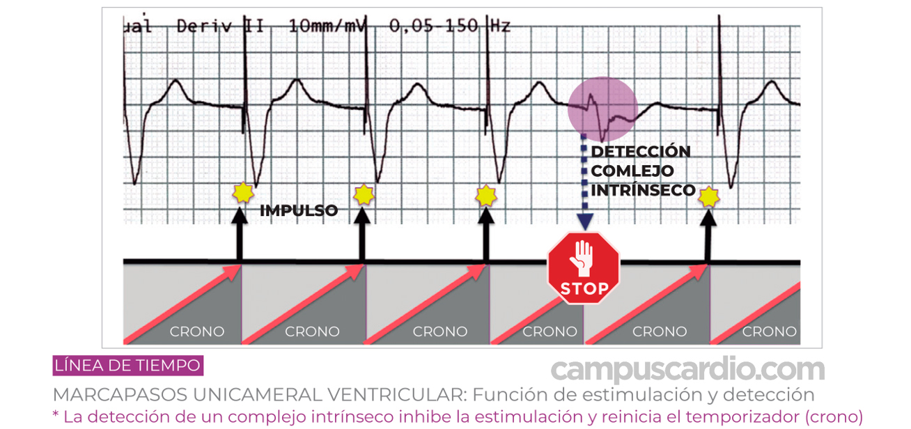 funciones-de-estimulación-y-detección